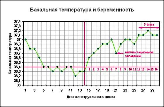 какая базальная температура у беременной дамы 2 недели